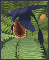 Microraptor gui snacking on a cycad fruit by Emily Willoughby - various sizes