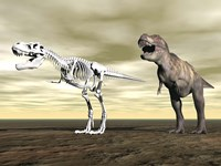 Comparison of Tyrannosaurus Rex standing next to its fossil skeleton by Elena Duvernay - various sizes