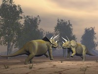 Confrontation between two Triceratops by Elena Duvernay - various sizes
