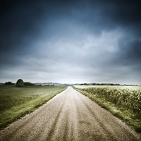 Country road through fields, Denmark Fine Art Print