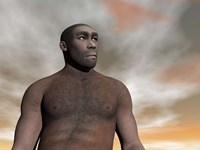 Male Homo Erectus, an extinct species of hominid by Elena Duvernay - various sizes