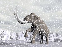 Mammoth walking through a blizzard on mountain Framed Print