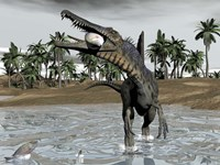 Spinosaurus dinosaur walking in water and feeding on fish by Elena Duvernay - various sizes