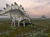 Stegosaurus dinosaurs grazing on plants by Elena Duvernay - various sizes
