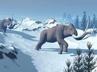 Two large mammoths walking slowly on the snowy mountain Fine Art Print