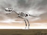 Tyrannosaurus rex skeleton by Elena Duvernay - various sizes