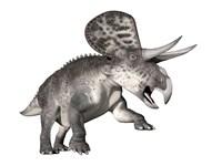 Zuniceratops dinosaur, white background by Elena Duvernay - various sizes