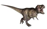 Aggressive Tyrannosaurus Rex growling, white background by Elena Duvernay - various sizes