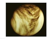 Venus - tan - various sizes