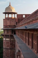 Two pigeons sit on the roof's ledge, Agra fort, India Fine Art Print
