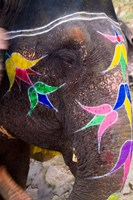 Elephant at Amber Fort, Rajasthan, Jaipur, India by Bill Bachmann - various sizes