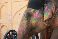 Decorated elephant at the Amber Fort, Jaipur, Rajasthan, India. Fine Art Print