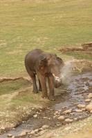 Elephant at waterhole, Corbett NP, Uttaranchal, India Fine Art Print