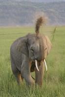 Elephant dust bath, Corbett NP, Uttaranchal, India Fine Art Print