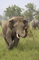 Elephant Greeting, Corbett National Park, Uttaranchal, India by Jagdeep Rajput - various sizes