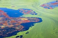 Algae on the water, Indhar Lake, Udaipur, Rajasthan, India by Keren Su - various sizes
