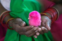 Woman and Chick Painted with Holy Color, Orissa, India by Keren Su - various sizes