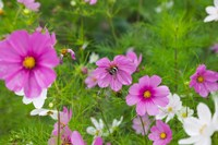 Meadow Flowers, Ladakh, India by Keren Su - various sizes