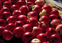 India, Ladakh, Leh. Apples at market in Lamayuru Fine Art Print