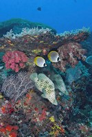 Scene of Fish and Coral