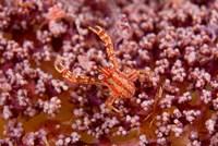 Crabcoralmarine life by Jaynes Gallery - various sizes