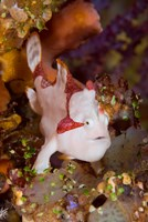 Frogfish or anglerfish by Jaynes Gallery - various sizes, FulcrumGallery.com brand