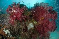 Marine Life, Reefs by Jaynes Gallery - various sizes