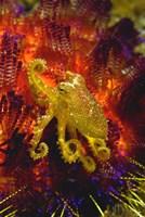 Octopus Marine Life