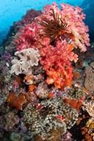 Coral, Raja Ampat, Papua, Indonesia Fine Art Print