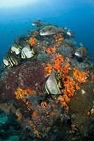 Fish swim around coral, Tatawa Besar, Komodo NP, Indonesia Fine Art Print