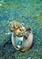 Octopus marine life by Jaynes Gallery - various sizes