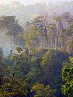 Sulawesi Tangkoko Rainforest, Sulawesi Fine Art Print