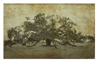 Sugarmill Oak, Louisiana Fine Art Print