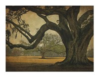 Two Oaks in Rain, Audubon Gardens Fine Art Print