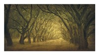 Evergreen, New Alley, Right Side Fine Art Print