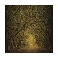 Evergreen Oak Alley (vertical view) Fine Art Print