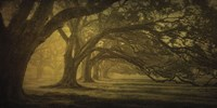 Oak Alley Morning Shadows Fine Art Print