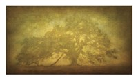 St. Joe Plantation Oak in Fog 3 Fine Art Print
