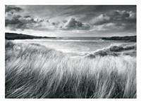 Sea Grass Fine Art Print