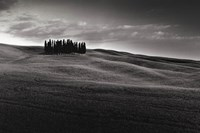 "Cypresses and Rolling Hills by Michael Hudson - 24"" x 16"""