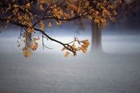Fog Leaf Fine Art Print