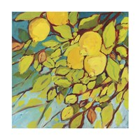 The Lemons Above Fine Art Print