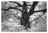 Portrait of a Tree, Study 12 Fine Art Print