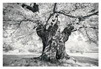 """Portrait of a Tree, Study 18 by Marcin Stawiarz - 19"""" x 13"""""""