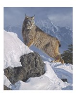 Austere Ascent (Lynx) Fine Art Print
