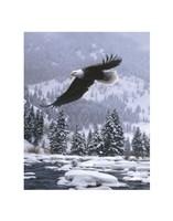 """Free Flight (detail) by Daniel Smith - 11"""" x 14"""""""