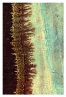 Lichen I Fine Art Print