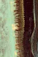 Lichen II Fine Art Print