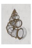 Wentletrap Shell Fine Art Print