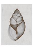 Achatina Shell Framed Print